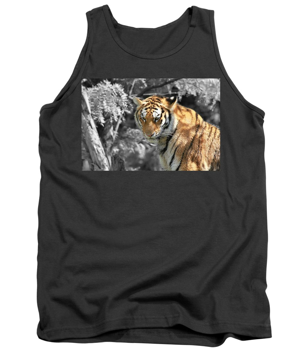 The Tiger Tank Top featuring the photograph The Tiger by Dan Sproul