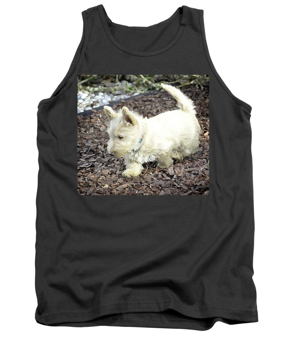 Idaho Falls Tank Top featuring the photograph The Wheaten Pup by Image Takers Photography LLC - Carol Haddon