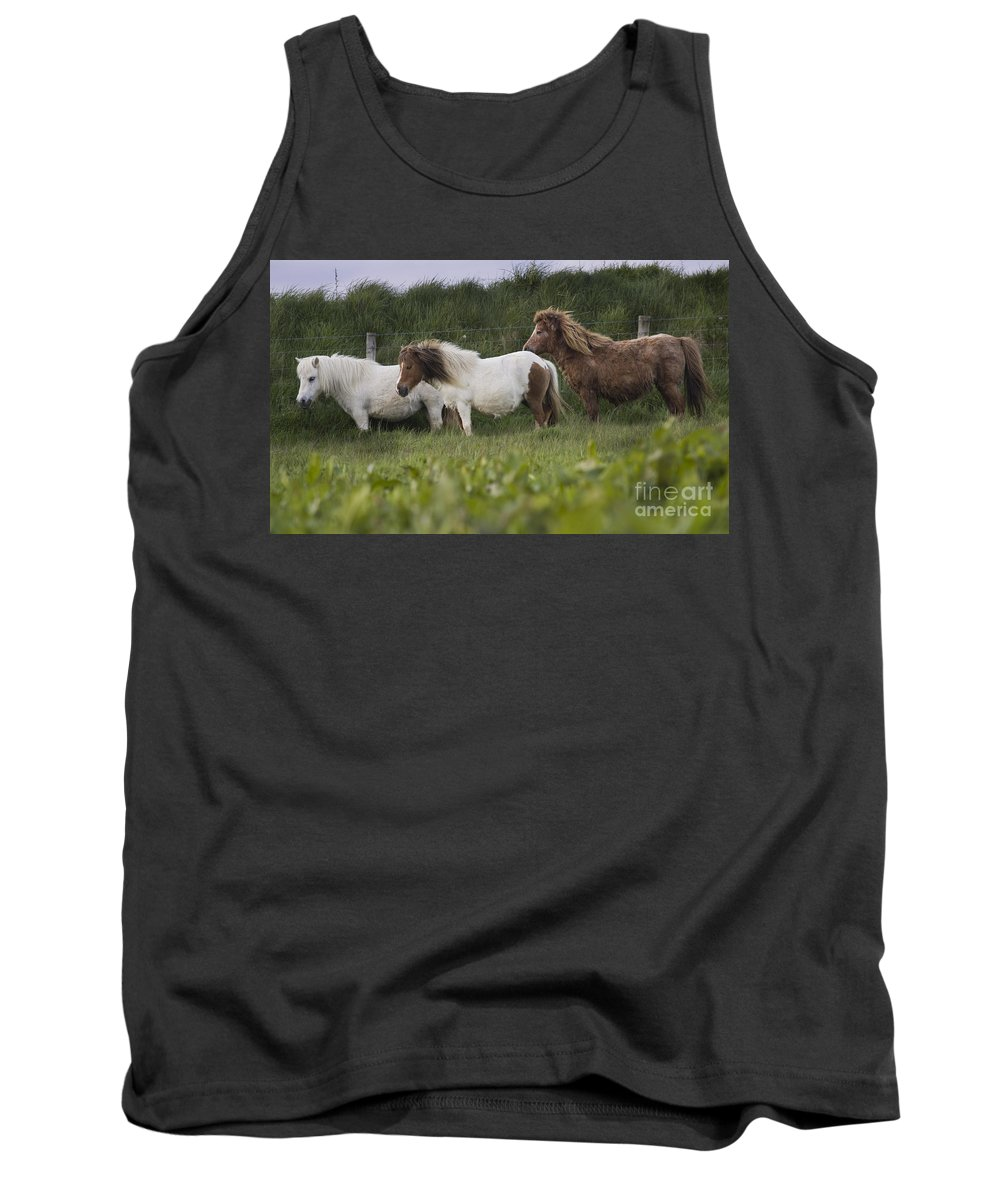 Shetland Tank Top featuring the photograph Three Ponies by Angel Ciesniarska
