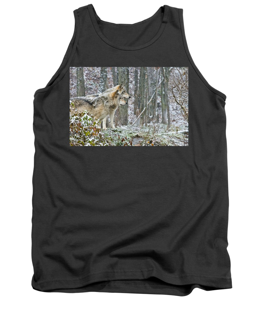Timber Wolf Tank Top featuring the photograph Timber Wolf Pictures 184 by Wolves Only