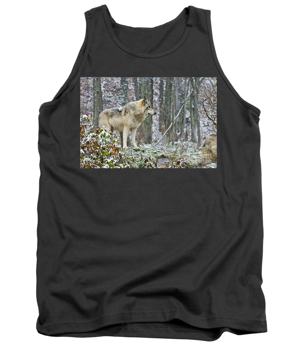 Timber Wolf Tank Top featuring the photograph Timber Wolf Pictures 185 by Wolves Only