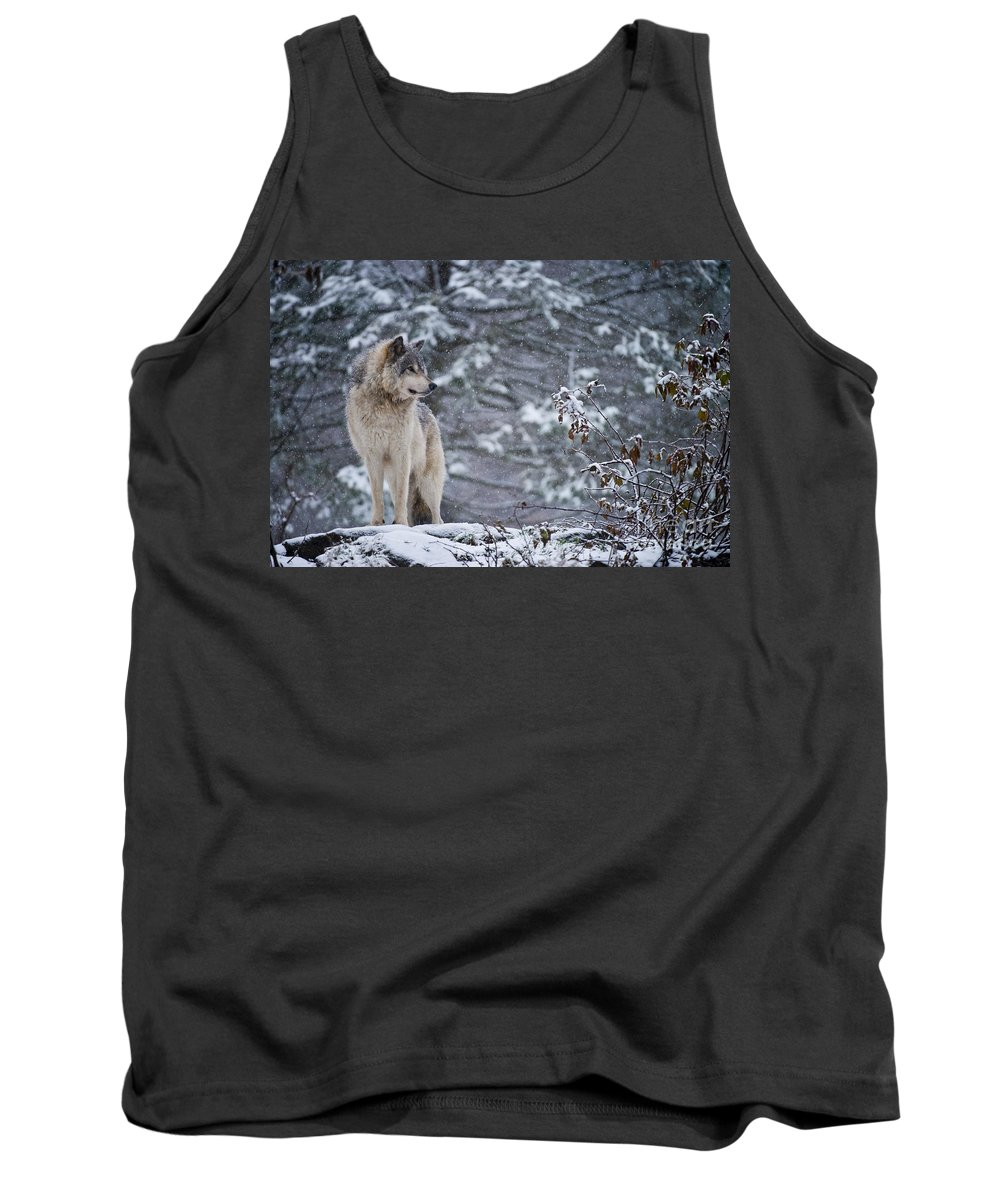 Timber Wolf Tank Top featuring the photograph Timber Wolf Pictures 189 by Wolves Only