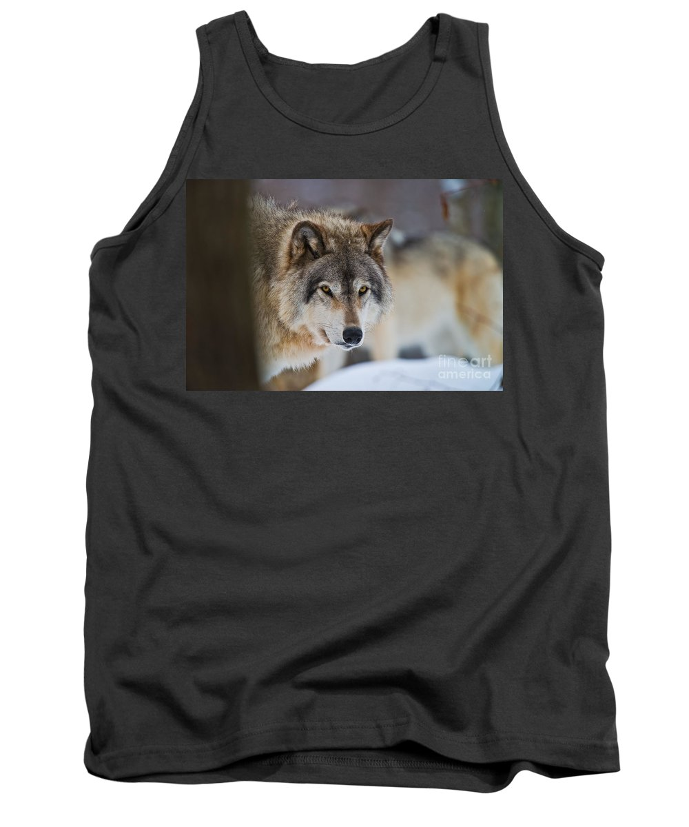 Timber Wolf Tank Top featuring the photograph Timber Wolf Pictures 259 by Wolves Only