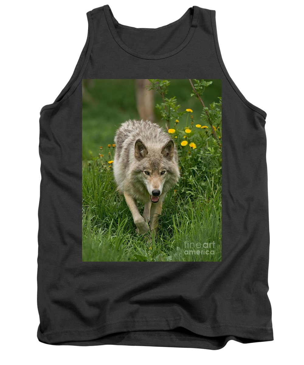 Timber Wolf Tank Top featuring the photograph Timber Wolf Pictures 59 by Wolves Only