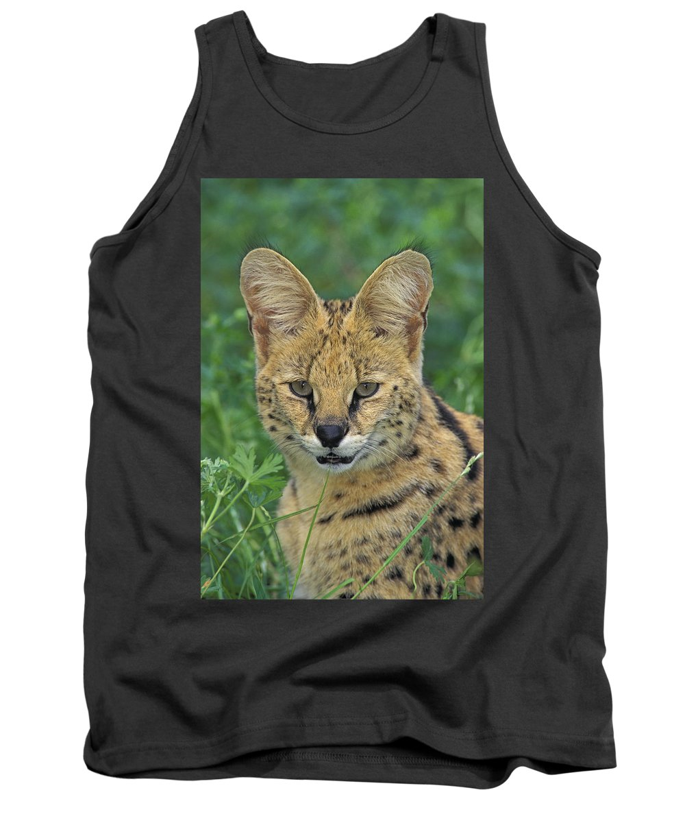 Tank Top featuring the photograph Tk0524, Thomas Kitchin Serval. Huge by First Light