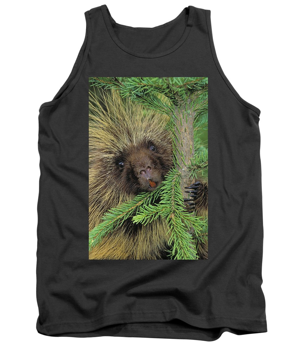 Adulthood Tank Top featuring the photograph T.kitchin 14107c, Porcupine In Spruce by First Light