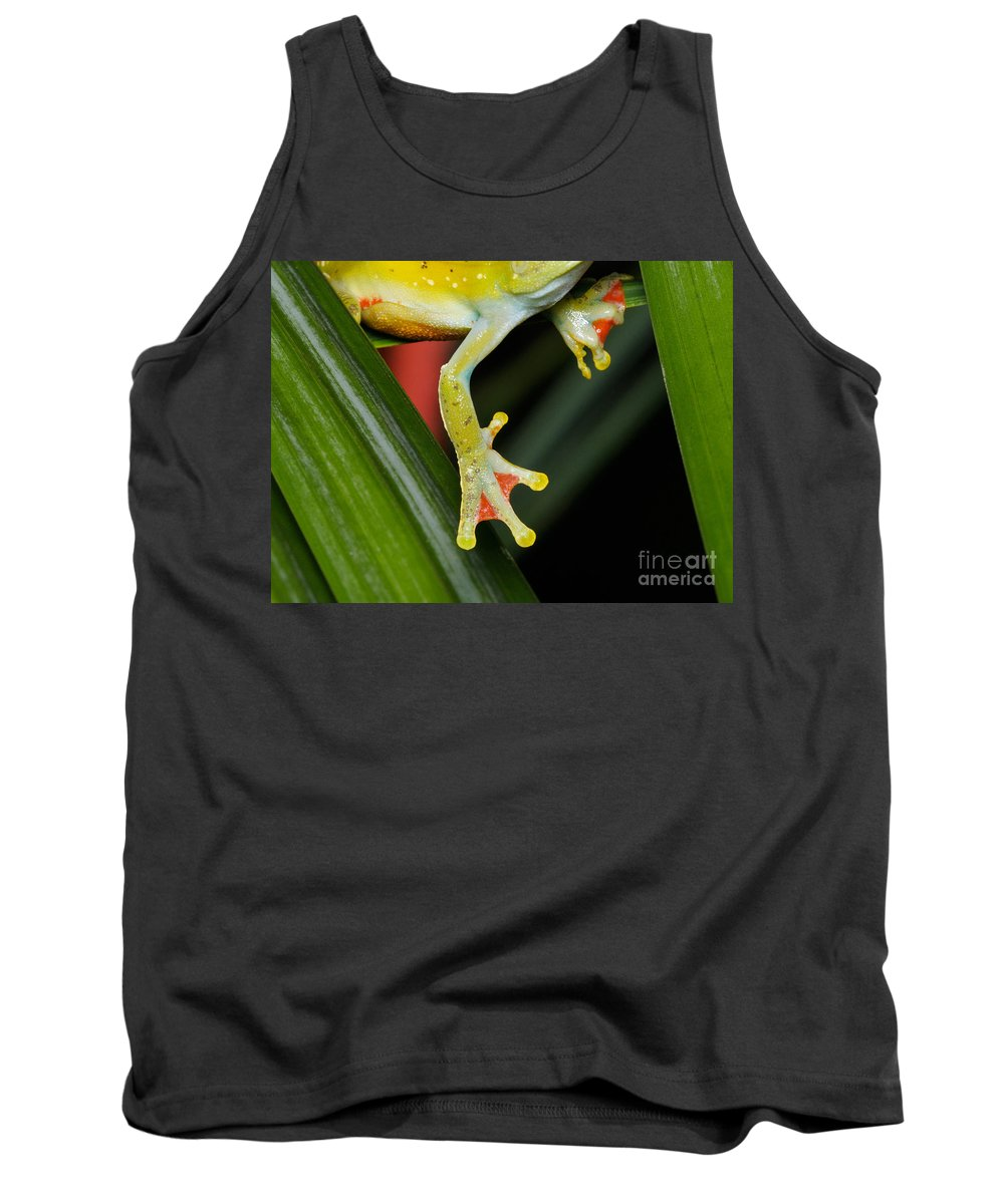 Hypsiboas Tank Top featuring the photograph Treefrog Foot by Martin Shields