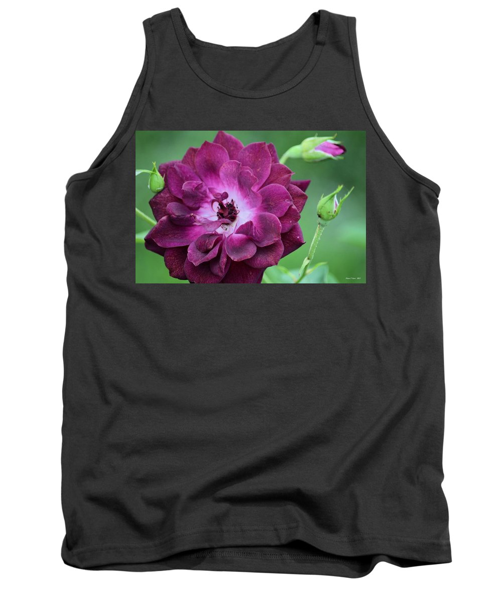 Violet Rose And Buds Tank Top featuring the photograph Violet Rose And Buds by Maria Urso