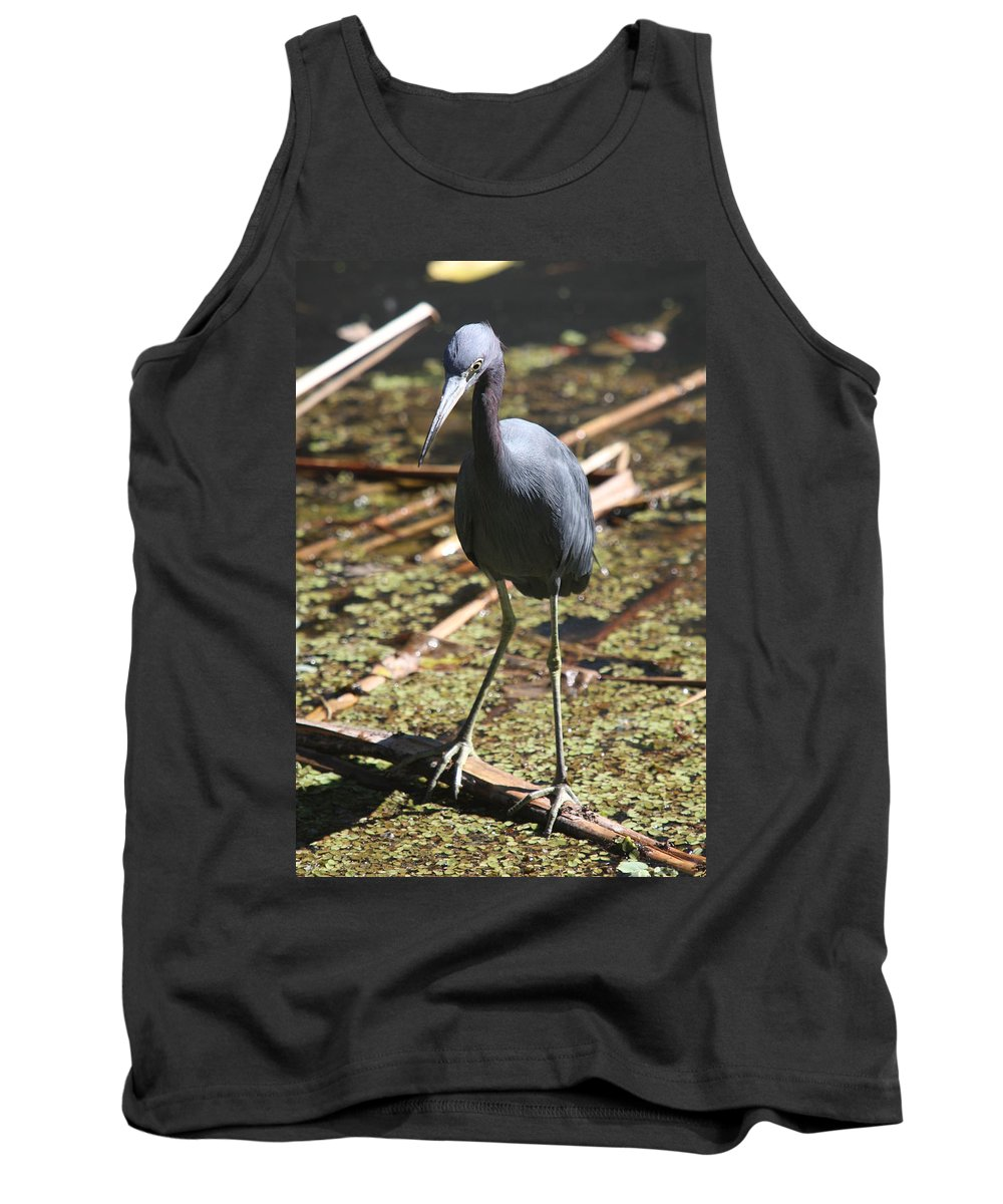 Heron Tank Top featuring the photograph Watchful Little Blue Heron by Christiane Schulze Art And Photography