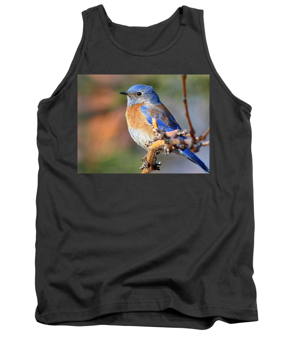 Animal Tank Top featuring the photograph Western Bluebird Profile by Ron D Johnson