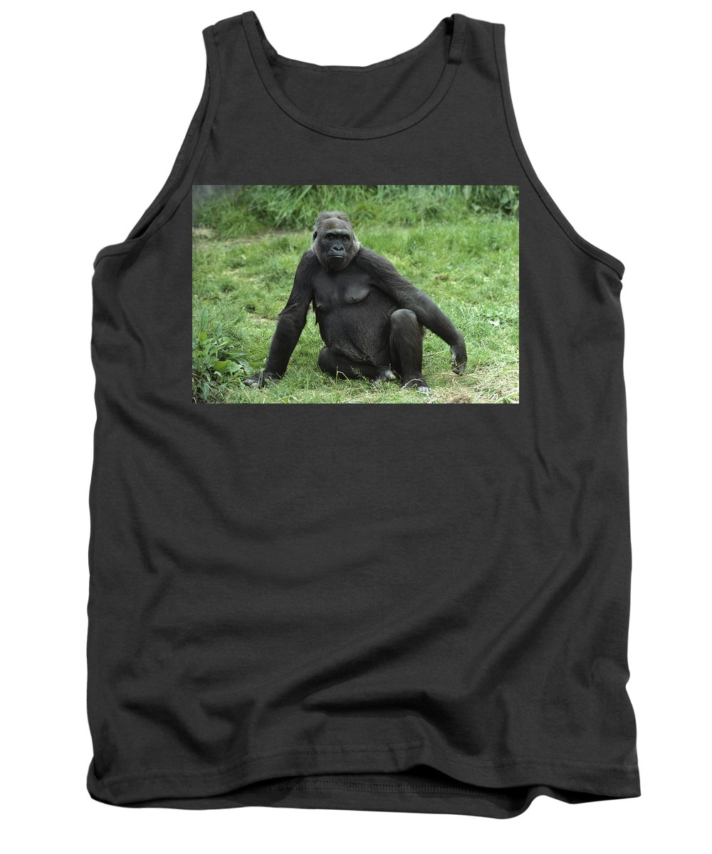 Feb0514 Tank Top featuring the photograph Western Lowland Gorilla Female by Gerry Ellis