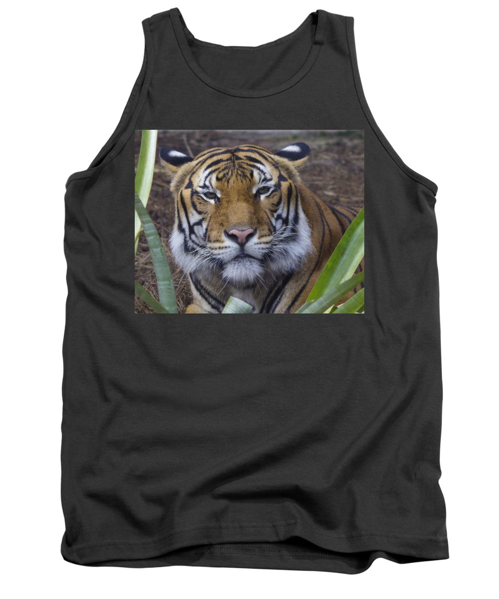 Lowery Park Zoo Tank Top featuring the photograph Whats For Dinner by Stephen Brown