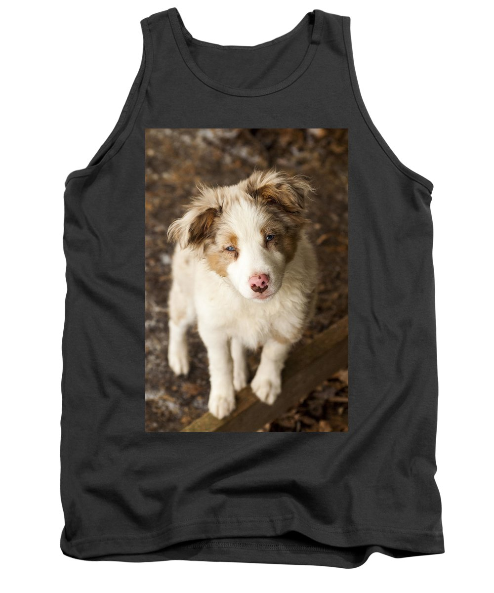 Whiskey Tank Top featuring the photograph Whiskey by Annette Persinger