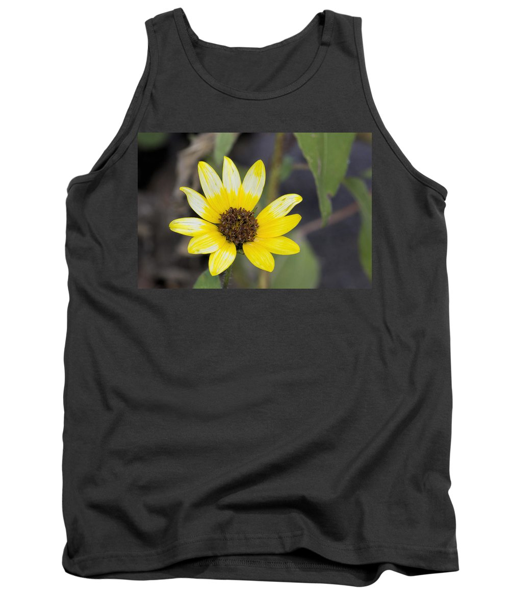 White And Yellow Sunflower Tank Top featuring the photograph White And Yellow Sunflower by Becca Buecher