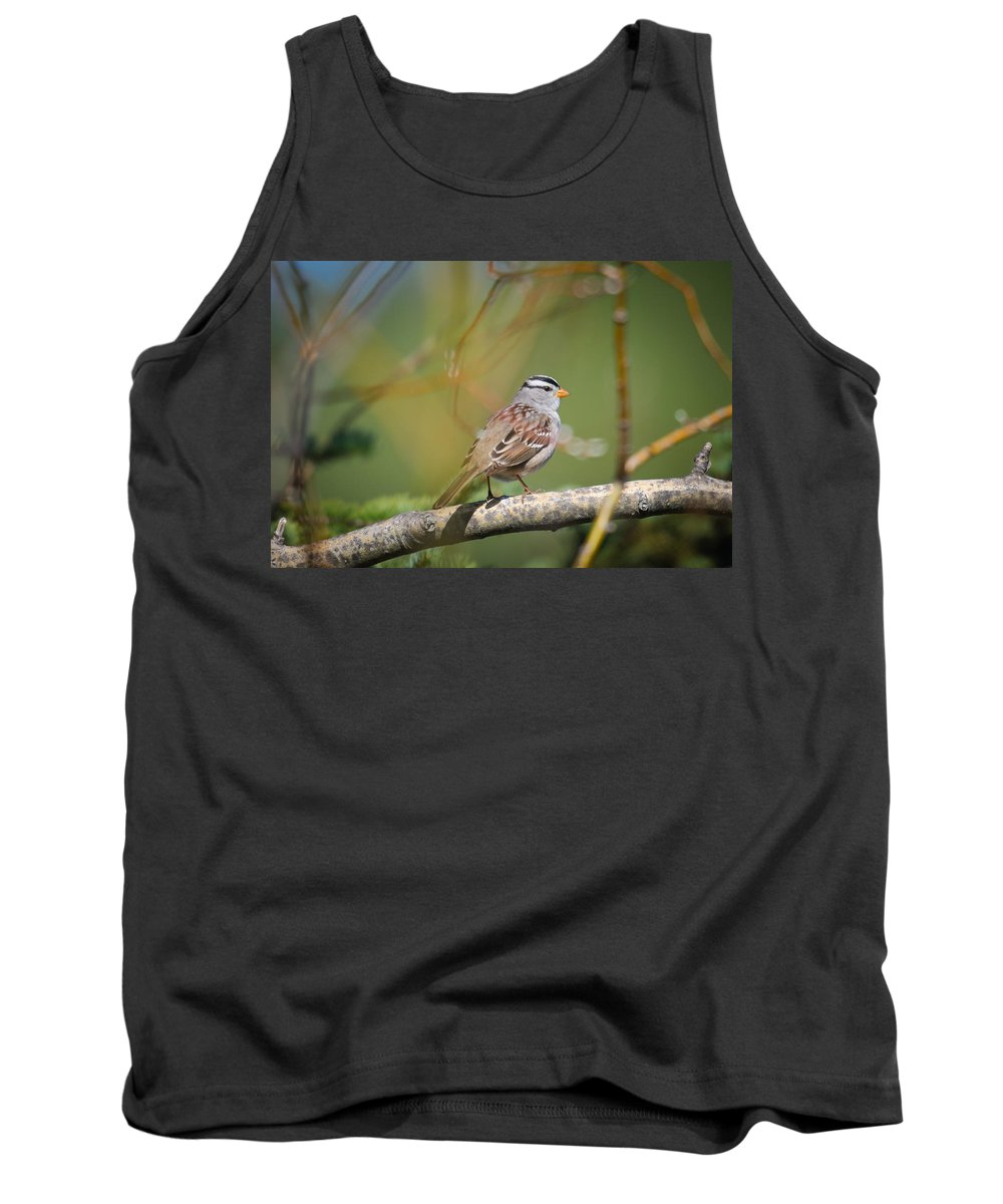 Alberta Tank Top featuring the photograph White-crowned Sparrow by Brandon Smith