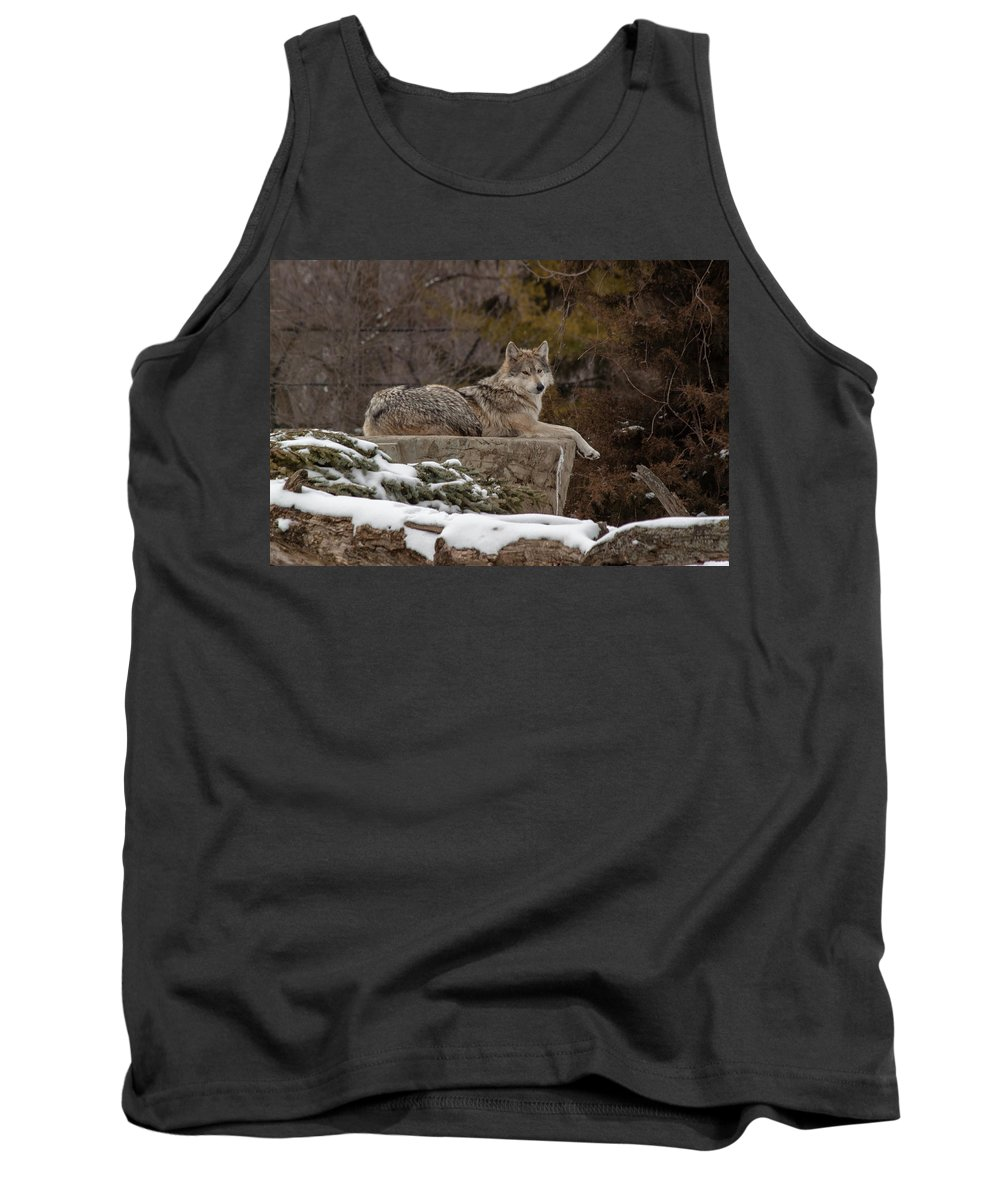 Female Wolves Tank Top featuring the photograph Who Me by Thomas Sellberg