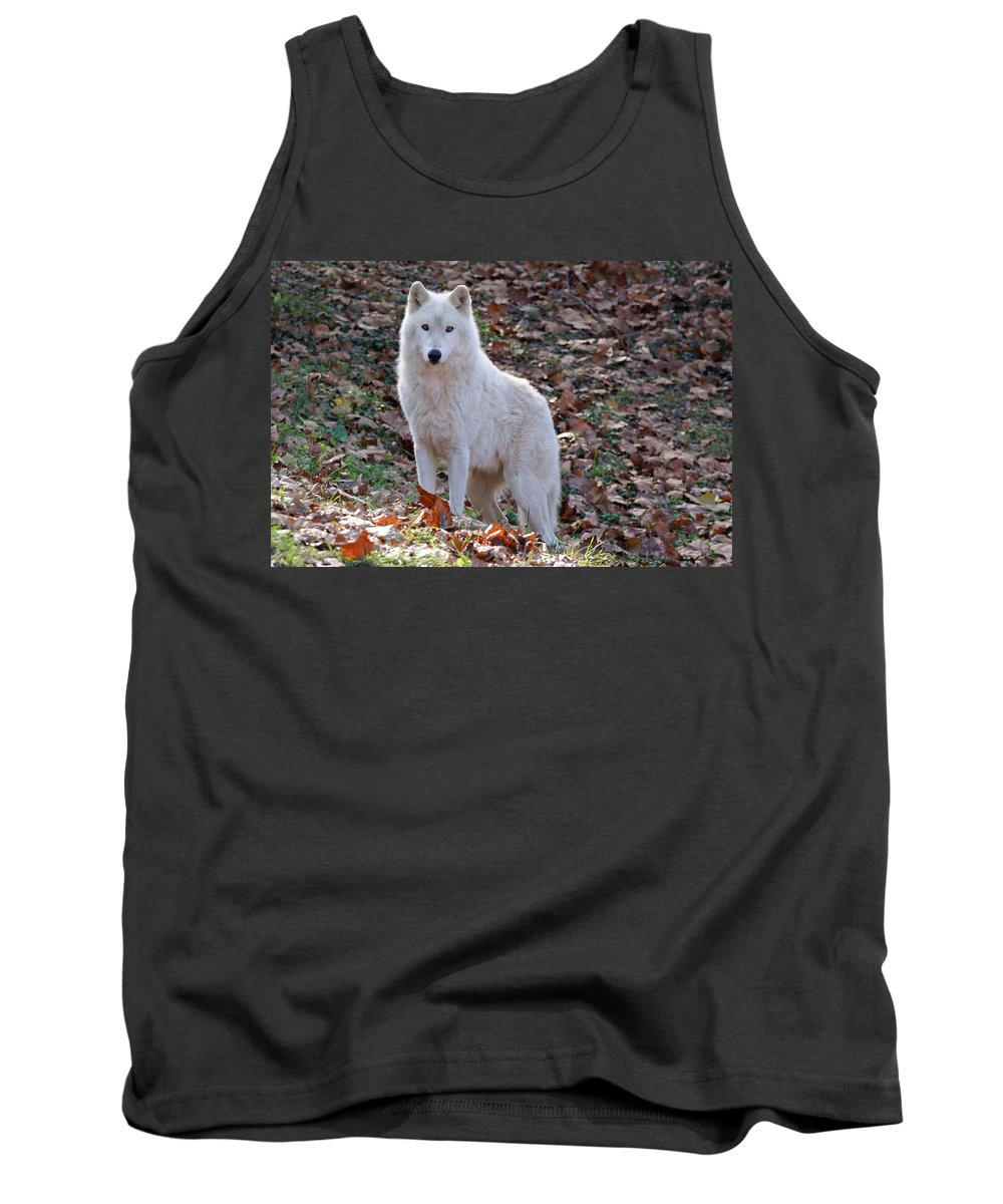 Wolf Tank Top featuring the photograph Wolf In Autumn by Sandy Keeton