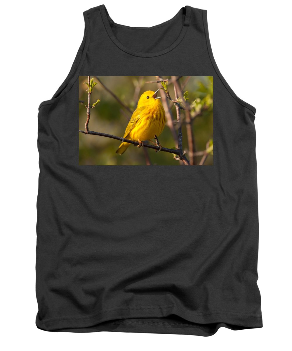 Bird Tank Top featuring the photograph Yellow Warbler Singing by Richard Kitchen
