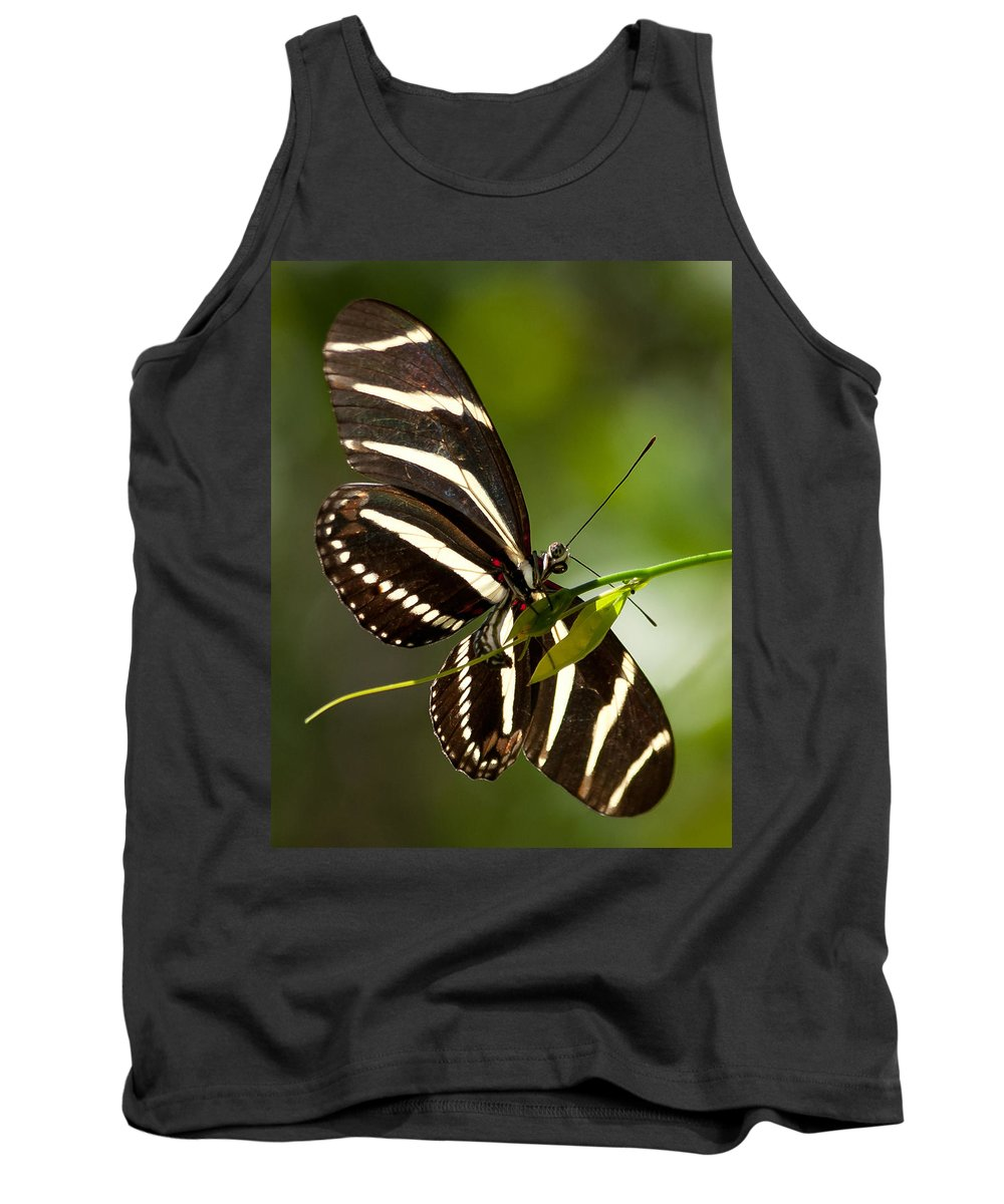 Zebra Tank Top featuring the photograph Zebra Longwing 3 by Photos By Cassandra