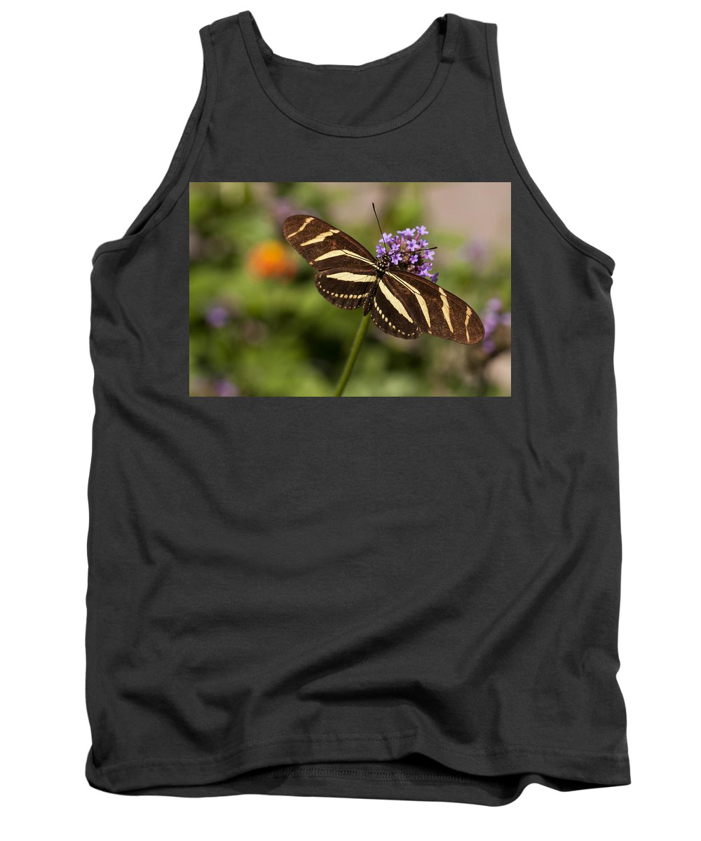 3scape Photos Tank Top featuring the photograph Zebra Longwing Butterfly by Adam Romanowicz