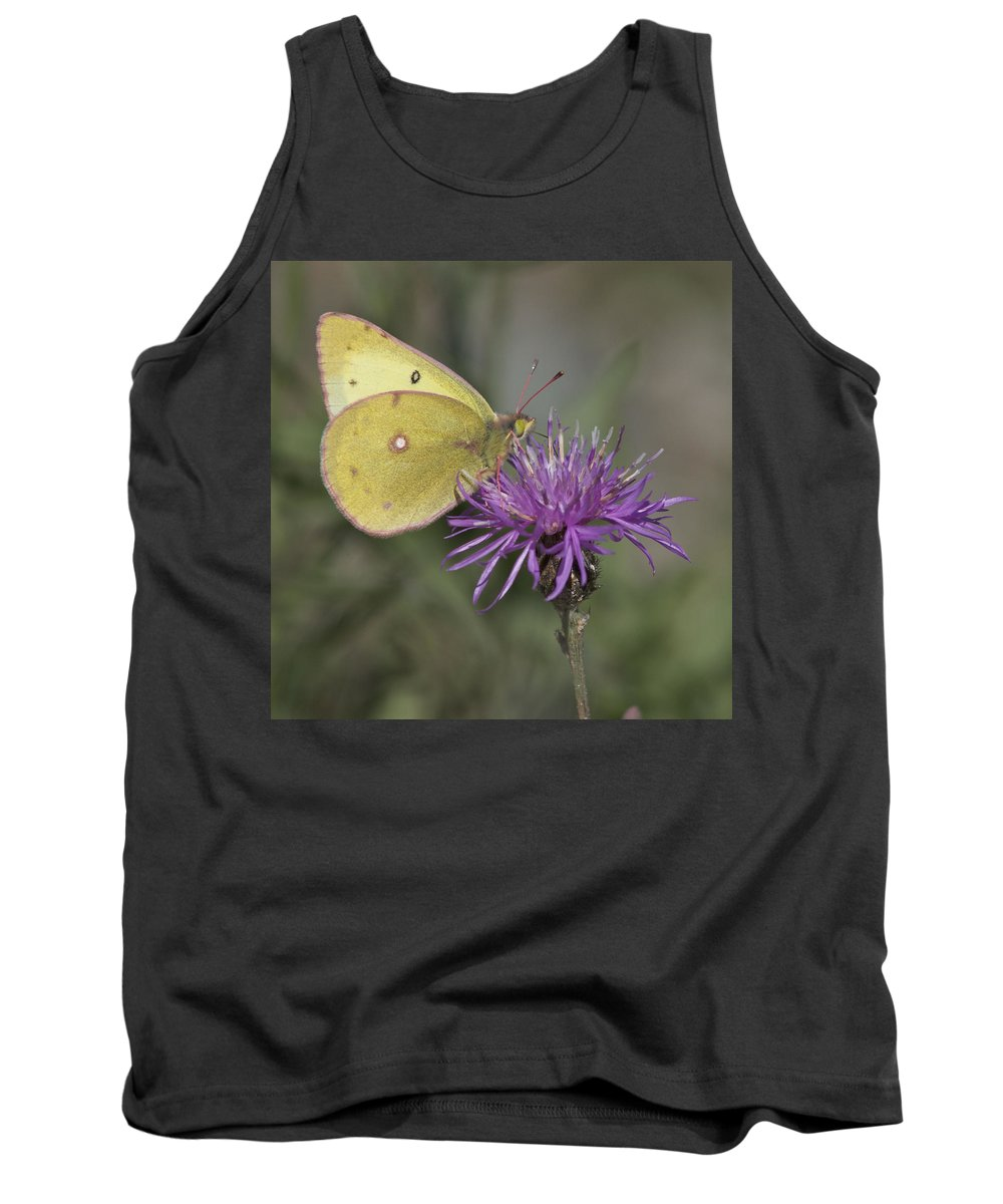 Butterfly Tank Top featuring the photograph Clouded Yellow Butterfly by Cathie Douglas