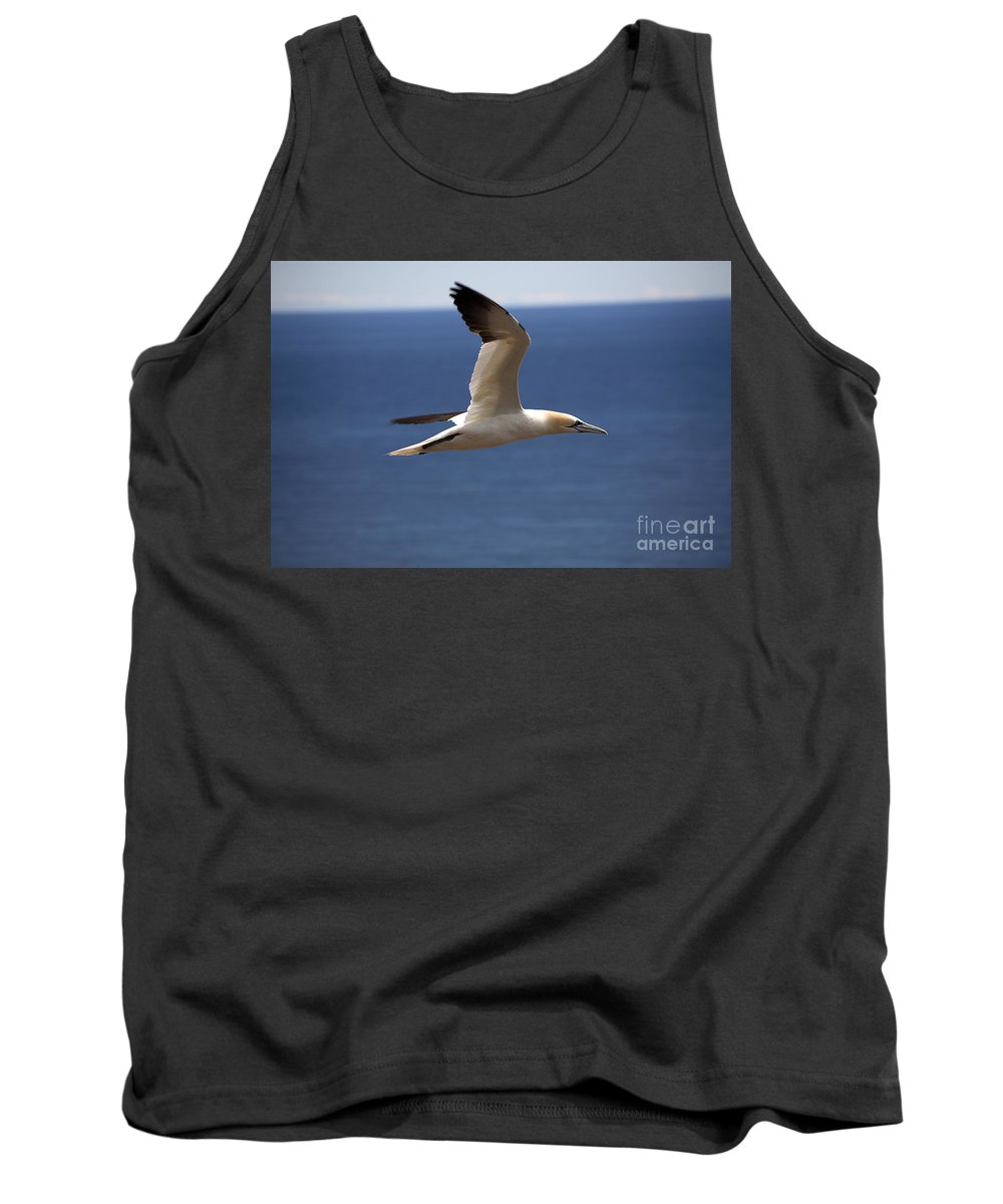 Northern Gannet Tank Top featuring the photograph Gannet In Flight by Ted Kinsman