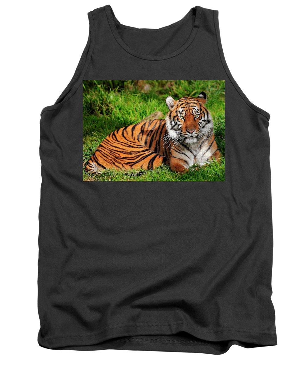 Sumatran Tank Top featuring the photograph Sumatran Tiger by Bill Dodsworth
