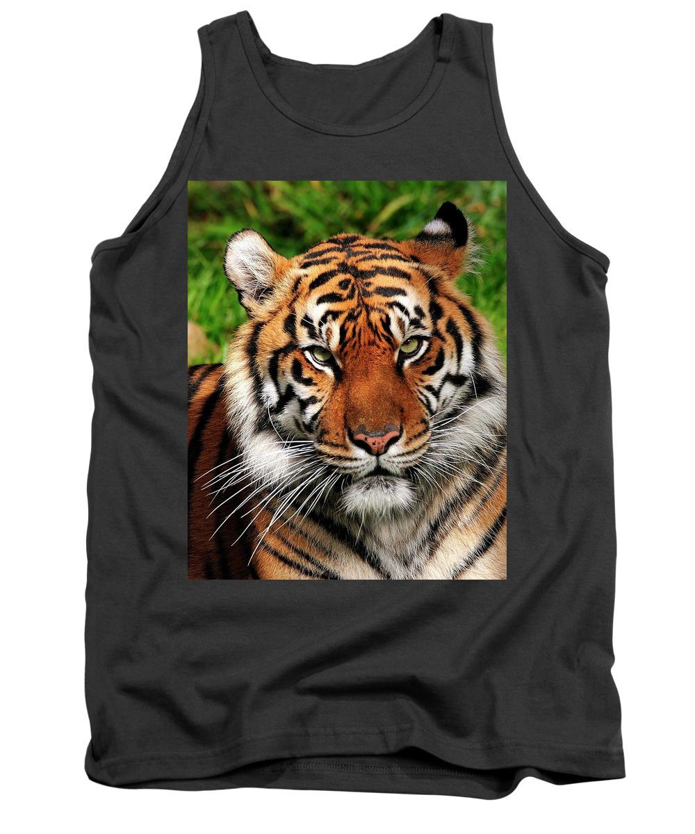 Sumatran Tank Top featuring the photograph Sumatran Tiger Portrait by Bill Dodsworth