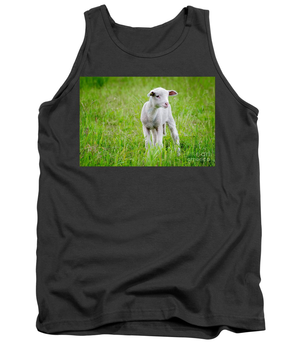 Sheep Tank Top featuring the photograph Young Sheep by Mats Silvan