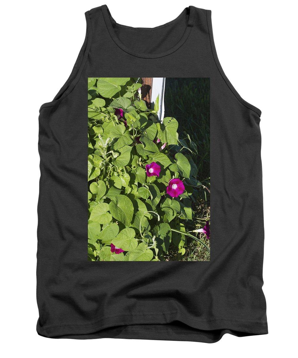 Ipomoea Pandurata Tank Top featuring the photograph Alabama Wild Pink Morning Glories by Kathy Clark