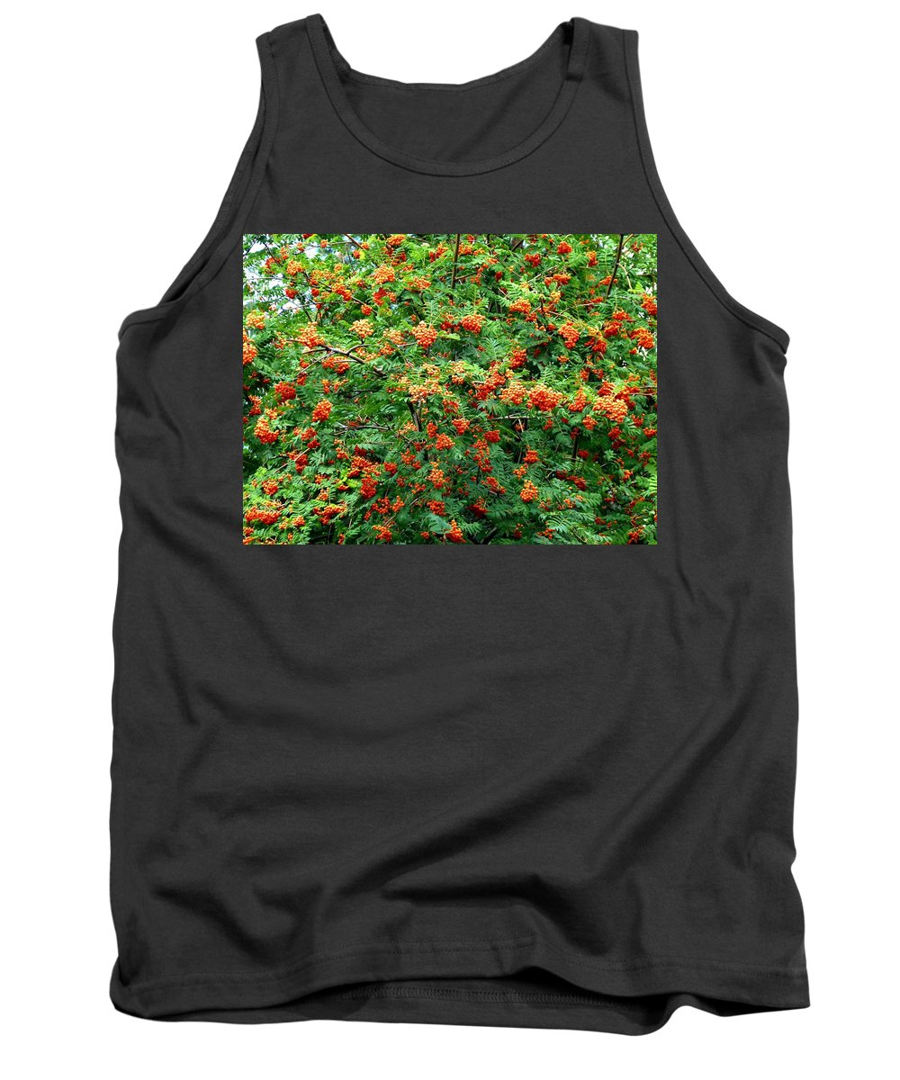 Mountain Ash Tank Top featuring the photograph Berries In Profusion by Will Borden