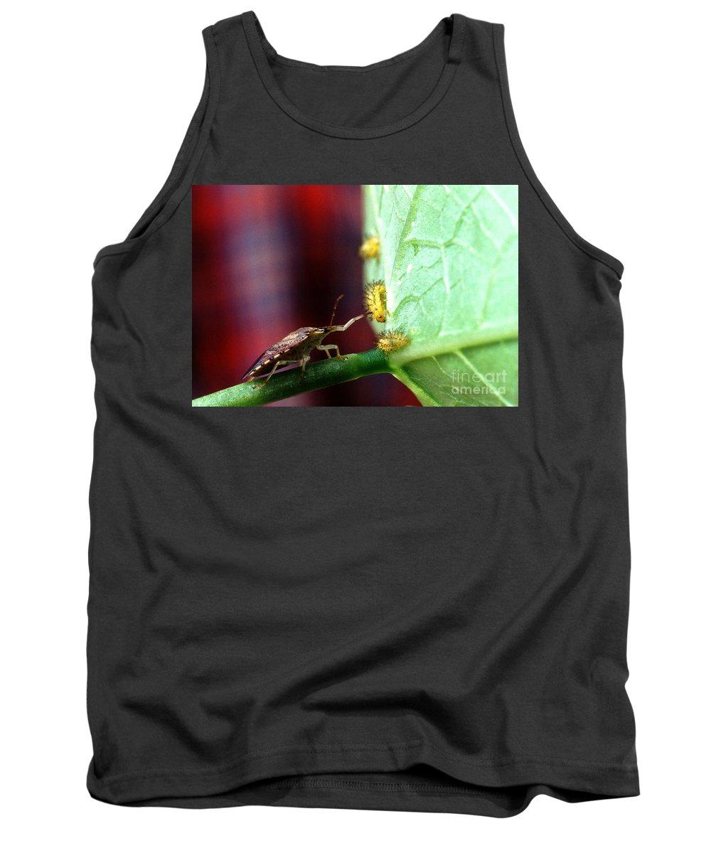 Mexican Bean Beetle Photographs Tank Tops