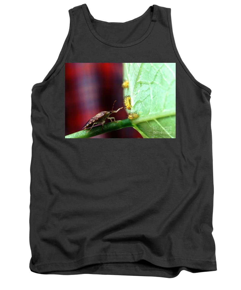 Mexican Bean Beetle Tank Tops