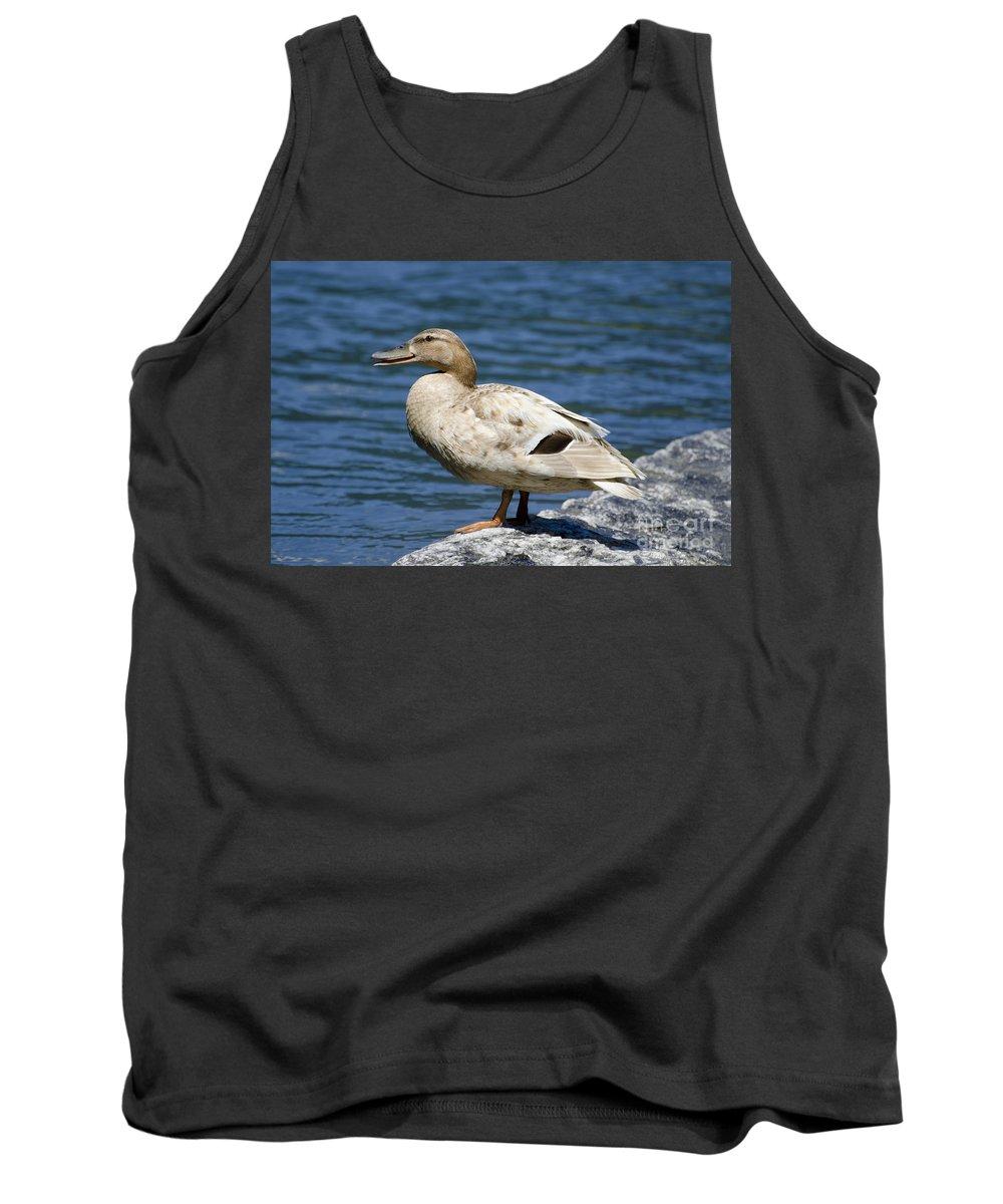 Duck Tank Top featuring the photograph Blond Duck by Mats Silvan