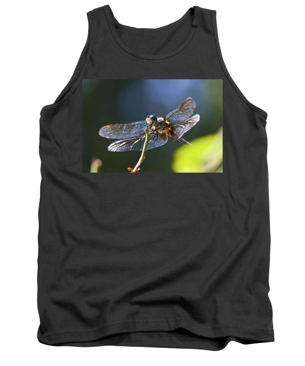 Insect Tank Top featuring the photograph Blue Dragonfly by Amy Jackson