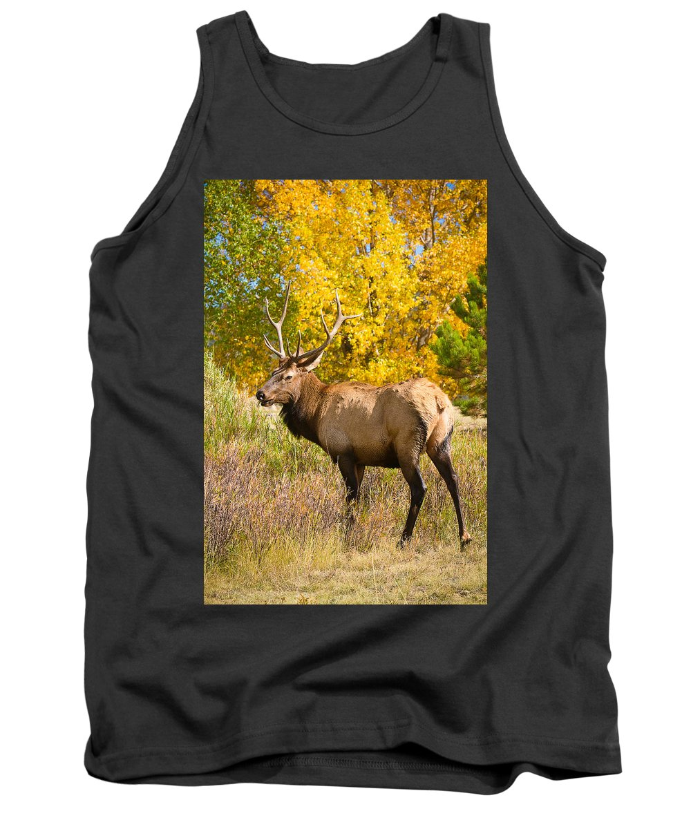 'estes Park' Tank Top featuring the photograph Bull Elk Autum Portrait by James BO Insogna