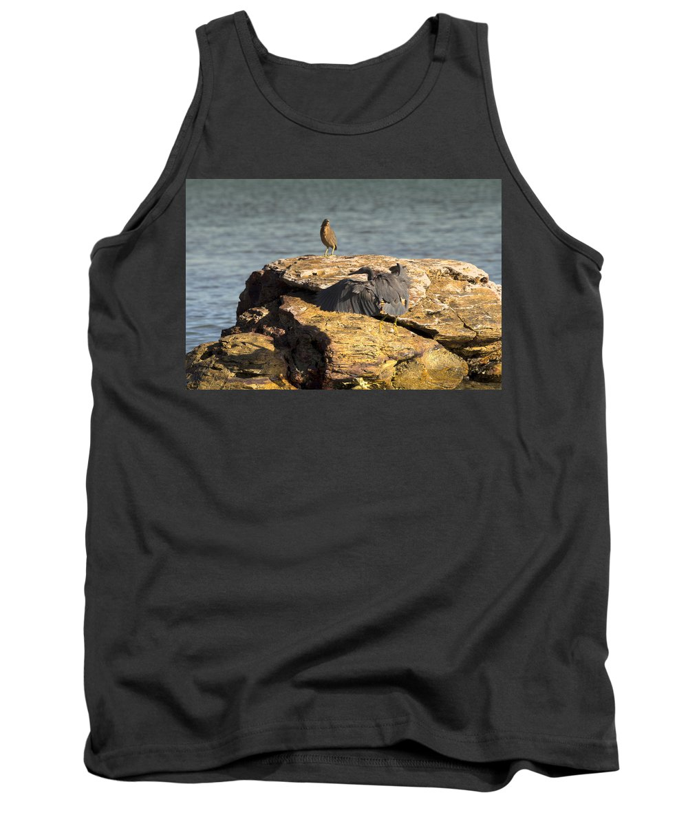 Dark Reef Egret Tank Top featuring the photograph Challenge For The Throne by Douglas Barnard