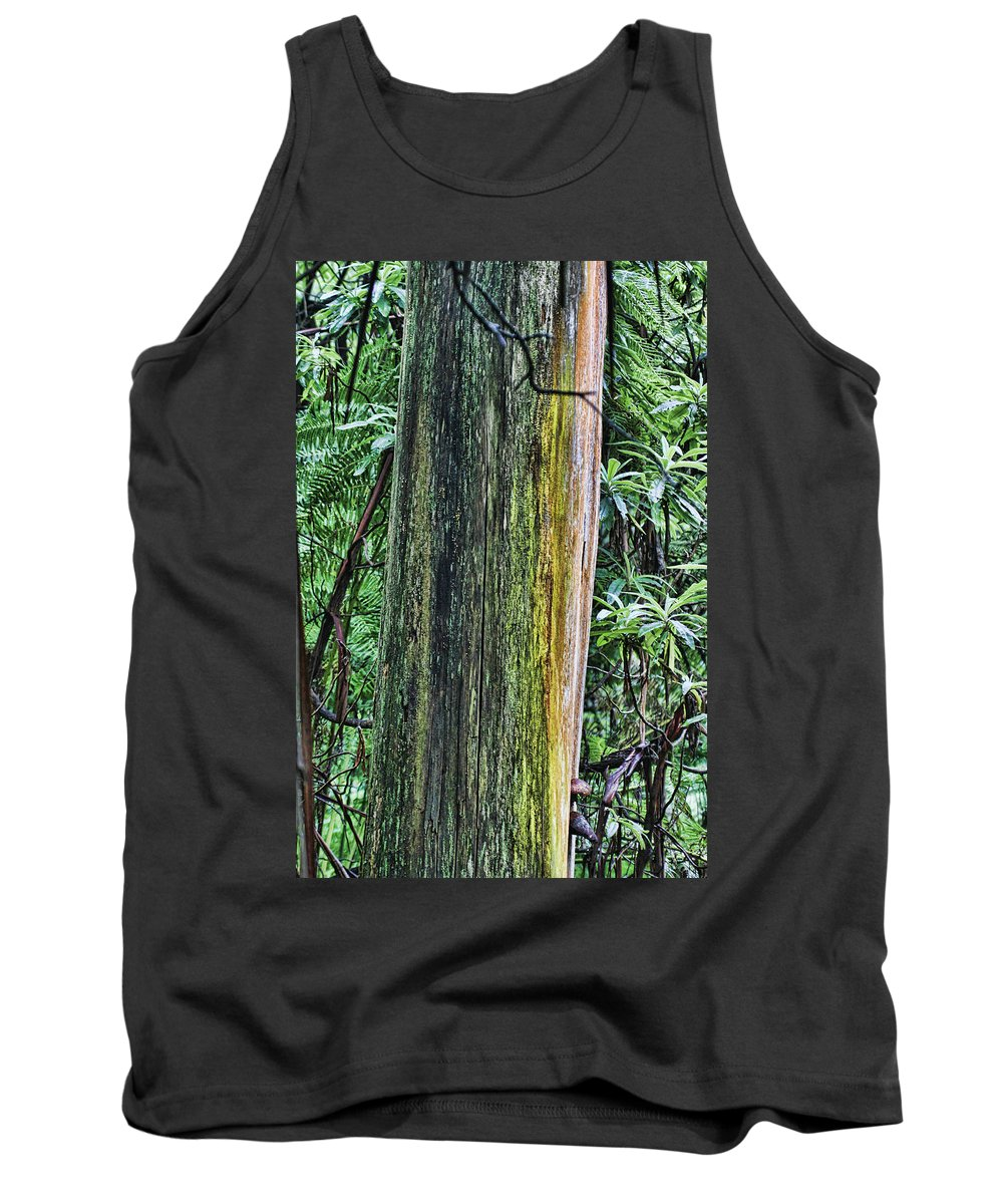 Color Tank Top featuring the photograph Color Of The Trees by Douglas Barnard