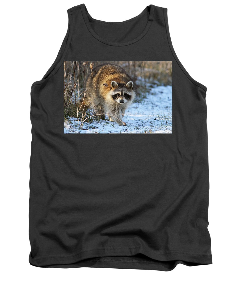 Banditos Tank Top featuring the photograph Common Raccoon by Mircea Costina Photography