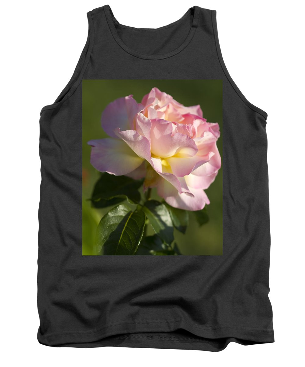 Peace Rose Tank Top featuring the photograph Cotton Candy Pink Peace Rose by Kathy Clark