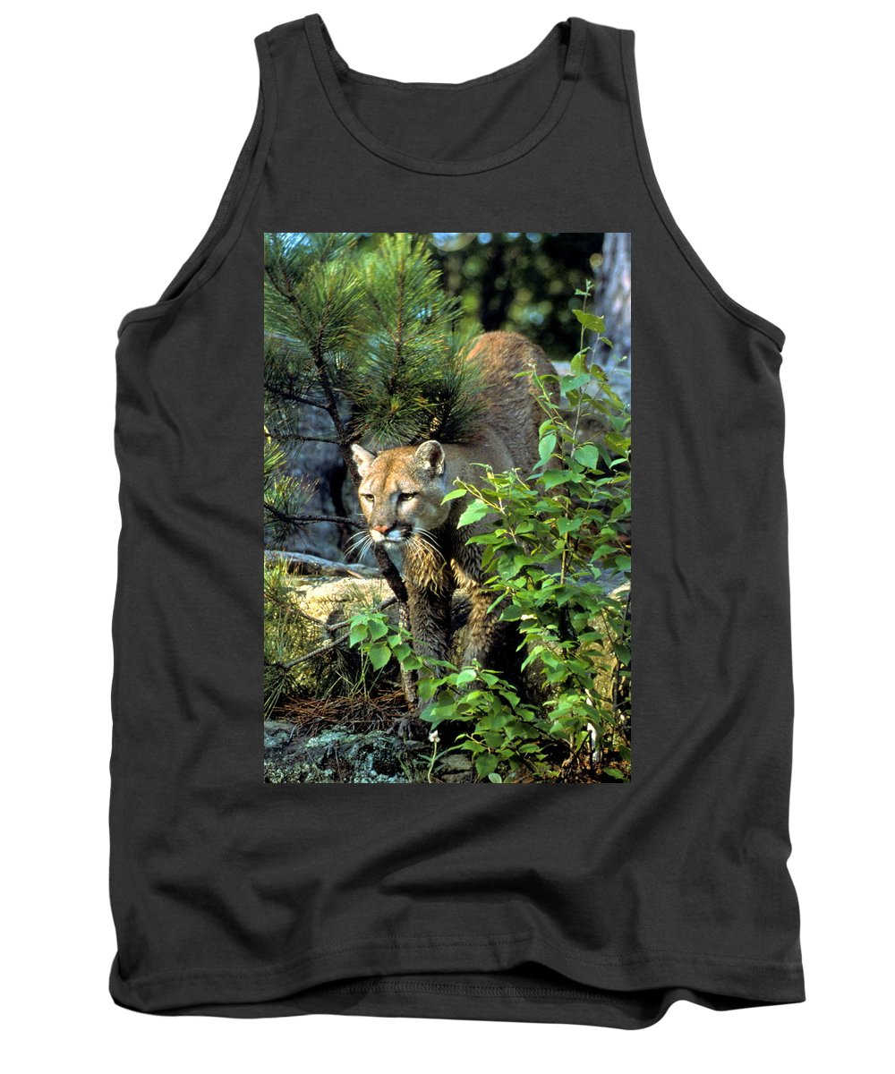 Cougar Tank Top featuring the photograph Cougar Coming Through by Larry Allan