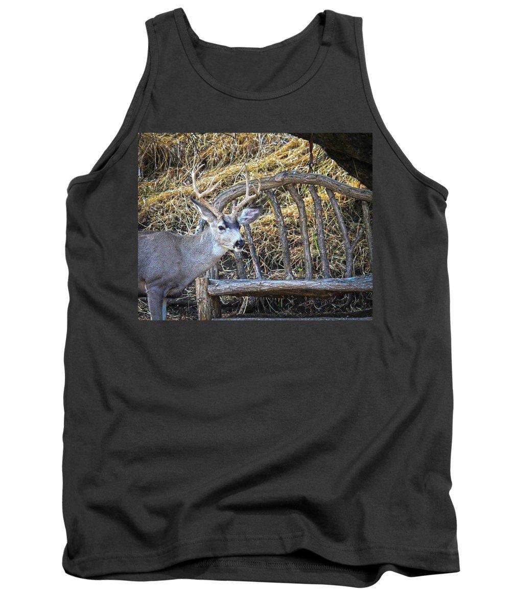 Mule Deer Buck Tank Top featuring the photograph Country Buck by Steve McKinzie