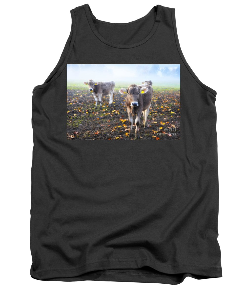 Cows Tank Top featuring the photograph Cows by Mats Silvan