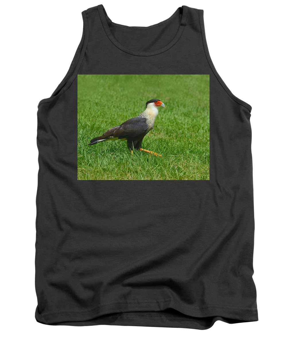 Northern Crested Caracara Tank Top featuring the photograph Crested Caracara by Tony Beck