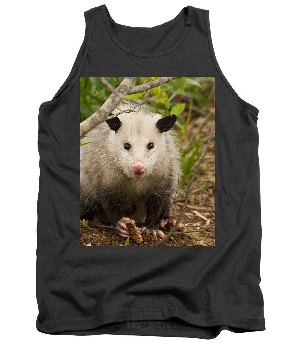 Didelphimorphia Tank Top featuring the photograph Don't Mess With Me Opossum by Kathy Clark