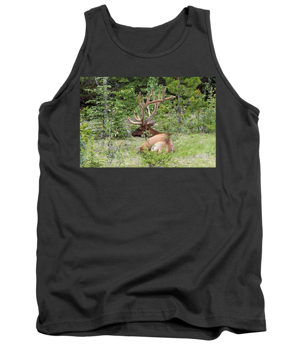 Animal Tank Top featuring the photograph Elk In Jasper National Park by Teresa Zieba
