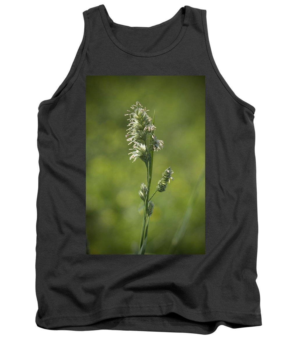 Phalaris Arundinacea Tank Top featuring the photograph Feathery Reed Canary Grass Vignette by Kathy Clark