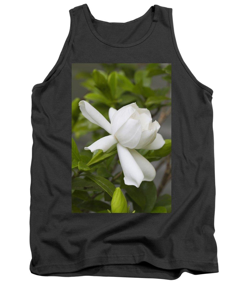 Gardenia Tank Top featuring the photograph Fragrant White Gardenia Blossom by Kathy Clark