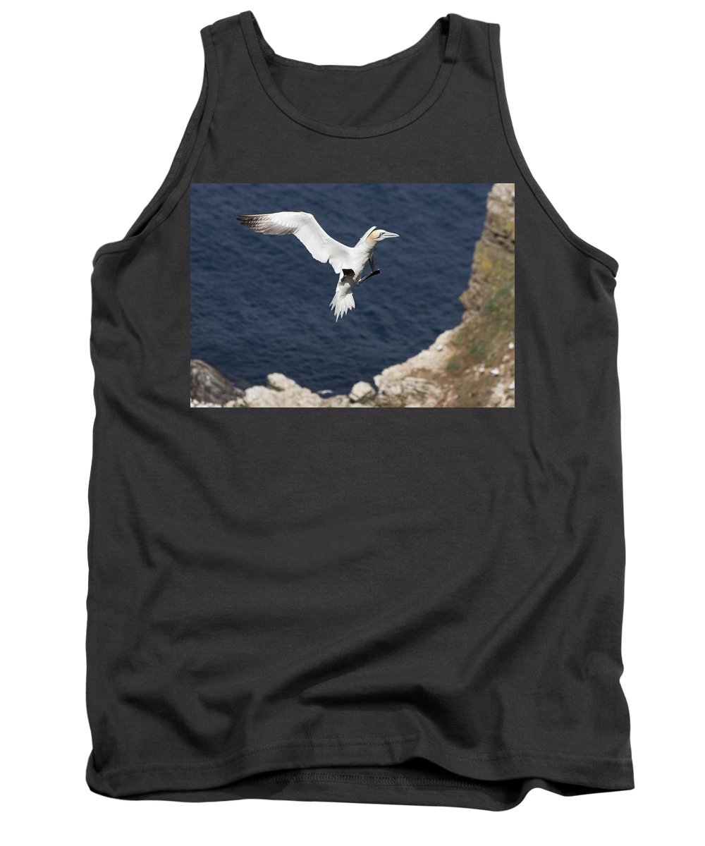Animals Tank Top featuring the photograph Gannet Landing by Howard Kennedy