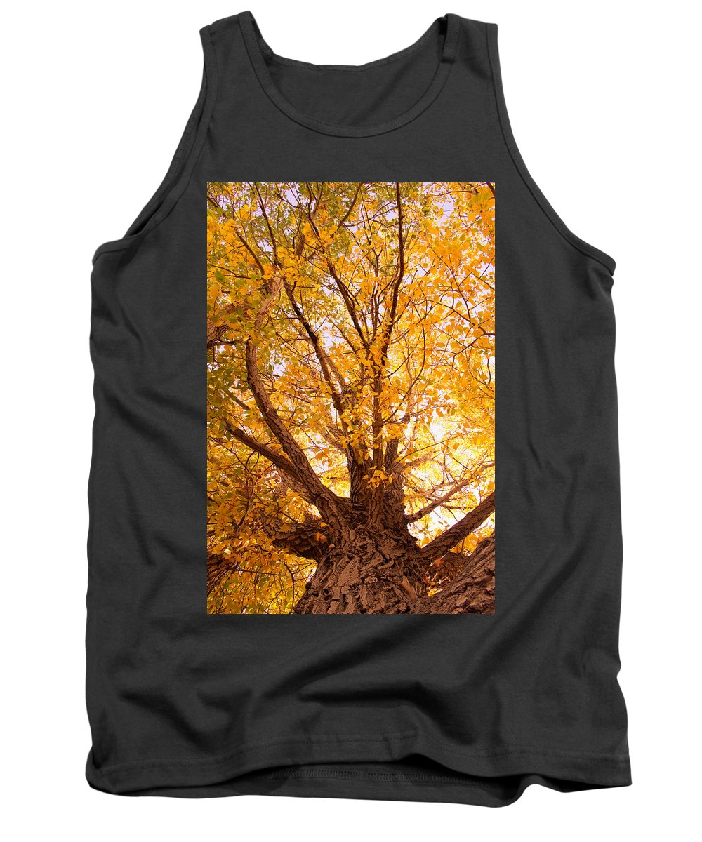 Autumn Tank Top featuring the photograph Golden Autumn View by James BO Insogna